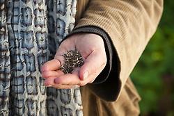 Handful of annual meadow seeds
