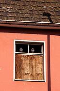 Europa, Deutschland, Nordrhein-Westfalen, Koeln, Tauben in einem Fenster eines alten leerstehenden Hafengebaeudes im Deutzer Hafen.<br /> <br /> Europe, Germany, North Rhine-Westphalia, Cologne, pigeons in a window of an old abandoned harbor building in the harbor Deutz.