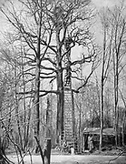 World War I 1914-1918:  French artillery observation post in the top of a tall tree from where they could direct fire onto enemy gun positions. From 'Le Pays de France', Paris, 17 June 1915.