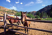 Horses, Middle Fork, Salmon River, Idaho<br />