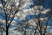 Clouds, trees and blue sky.