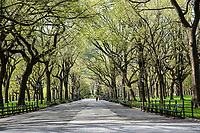 American Elms along an almost deserted Mall in Central Park