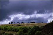 Treeline, Exmoor, 2011