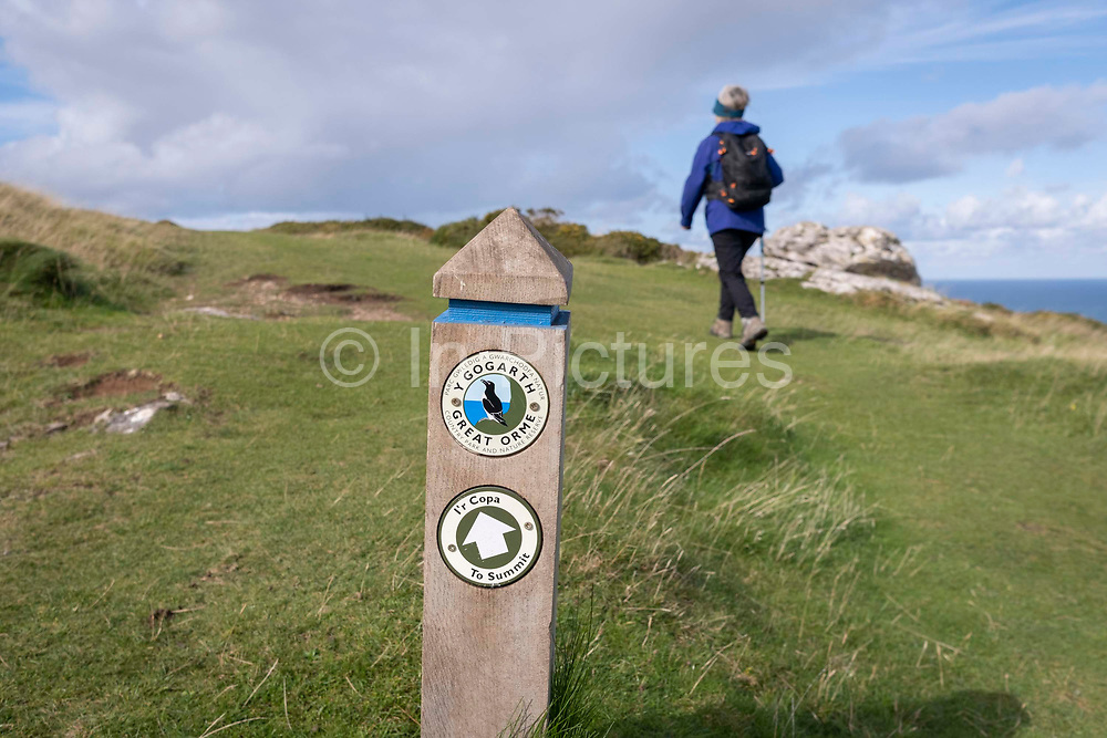 A walker passes a signpost and climbs uphill on a mountain footpath that takes walkers to the summit of Great Orme, on 4th October 2021, in Llandudno, Gwynedd, Wales.