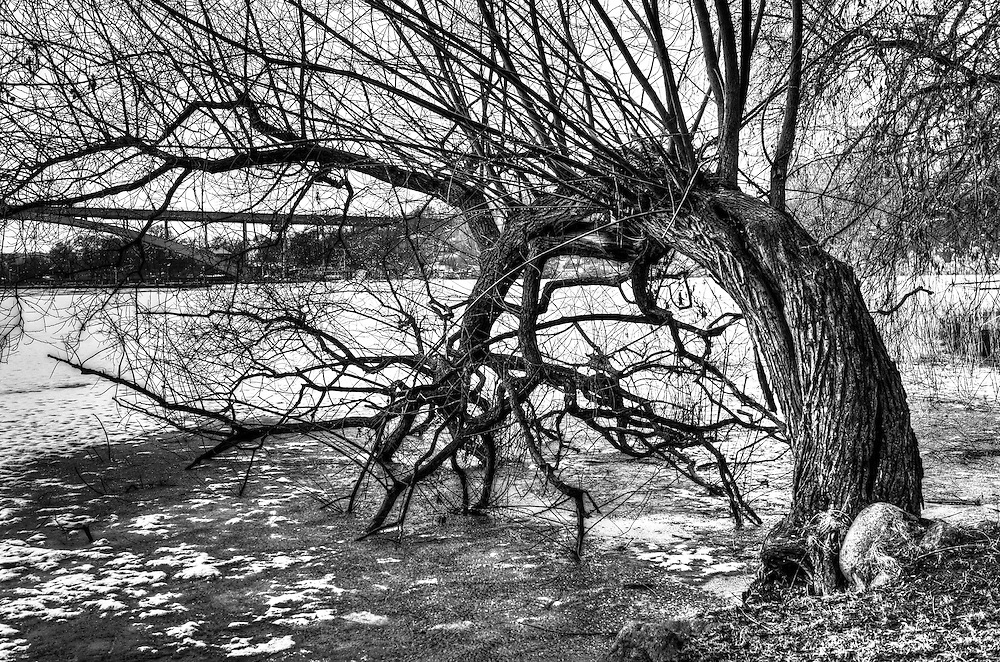 Warped tree