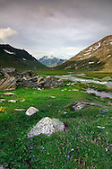 Col del Nivolet, a huge plateau at an average altitude of 2500 mts asl, is the heart of the Gran Paradiso National Park in the valley known as Valsavarenche, right on the border between the regions of Piedmont and Aosta Valley. The imposing pyramid of the Grivola is in the background