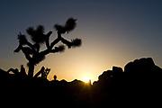 Sunset, Joshua Tree National Park, CA