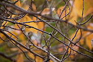 Even though the branches display the bareness of what lies ahead, the preparation for the new growth of Spring can be seen on the tips where leaf buds are beginning to form.