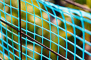 Bright blue plastic netting contrasts with rusty steel wire garden fences. WATERMARKS WILL NOT APPEAR ON PRINTS OR LICENSED IMAGES.