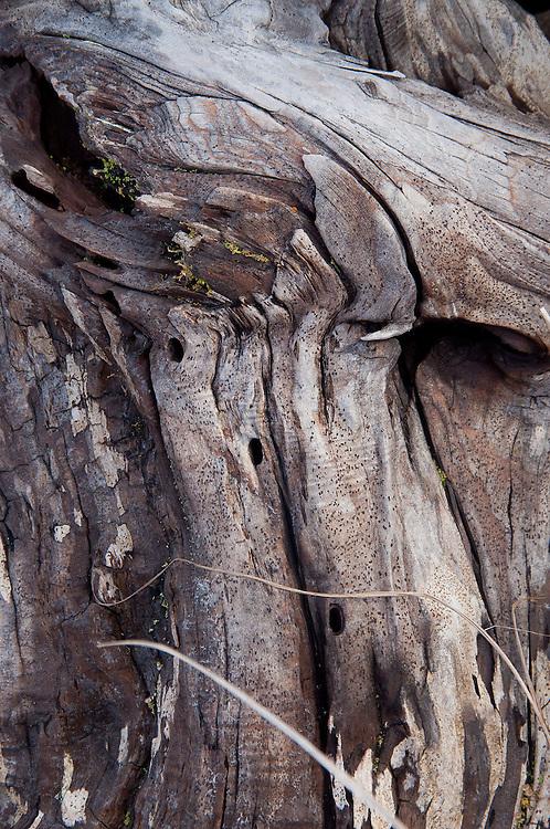 Driftwood Close-up  at Loomis Lake State Park, Long Beach, Washington, US