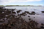 Ka'ala'alu Bay South Point, The Big Island of Hawaii