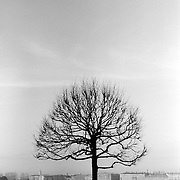 A solitary tree, bare of leaves in winter, on the bank of the Neva River in St Petersburg. Taken from near the Hermitage Museum.