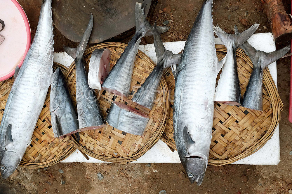 Fish being processed for sale at the local fish market in the coastal fishing village of Ninh Hai, Ninh Thuan province, Central Vietnam. A large variety of exotic fish are available for sale in fresh Vietnamese markets such as this, all being sold on small individual stalls.