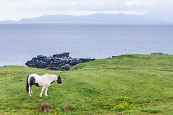 Horse and Clew Bay, County Mayo Ireland