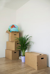 Moving house home still life boxes plant pot