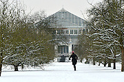 © Licensed to London News Pictures. 19/01/2013. Kew, UK A woman runs in the snow near a greenhouse. People enjoy the snow at Kew Gardens in West London today 19th January 2013. More cold weather and snow are expected over the coming days.  Photo credit : Stephen Simpson/LNP