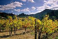 Vineyards in fall, Maple Creek Winery, Yorkville, Mendocino County, California