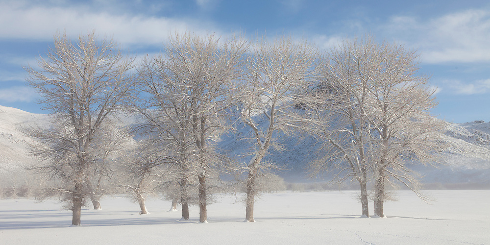 Cold winter mist lift with morning sunlight on grove of cottonwood trees near Picabo Idaho.  Licensing and Open Edition Prints.