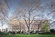 Tree in front of offices at Portman Square in london, west end.