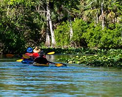 Kayakers exploring the Silver River in Ocala Florida.