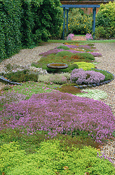 A scented carpet of mixed thyme at Hollington Herbs