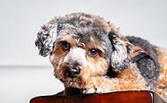 Otis the Therapy dog