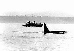 Orca & Tourist Boat