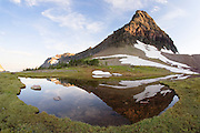 Reflection in pond near Hidden Lake,Glacier National Park