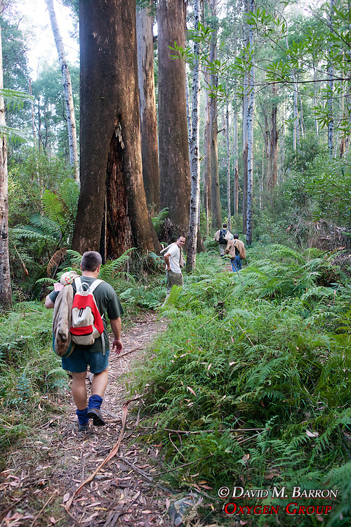 Eathwatch Team Heading To Release Possums
