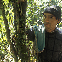 Homesteader Hernan Borges in cloud forest of Huabayacu River, upper Amazon.