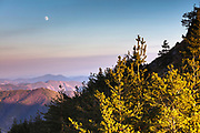 Lighted pine trees and a moon at sunset