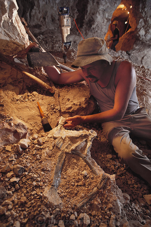 "Hunting for fossils: Mine owner Bob Foster displays fossil dinosaur remains found in an opal mine at ""the Sheepyards"" mine area Lightning Ridge, southern Australia. Fossil excavations usually follow existing mining operations. The seam of opal-bearing rock is about 100-120 million years old, laid down during the mid-Cretaceous Period, a time of rich diversification of dinosaur species. Australian fossils are particularly interesting, as at that time the continent was much closer to the South Pole than today. This means that many dinosaurs would have had to cope with long periods of permanent darkness during the winter months. MODEL RELEASED [1989]."