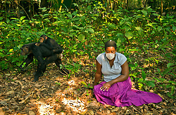 TNC employee Rosita Scarborough watches as chimps go by at Mahale National Park on Lake Tanganyika in Tanzania August 27, 2011. (Photo by Ami vitale)