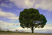 Lone tree with dramatic sky. Photographed on Crete, Greece in May