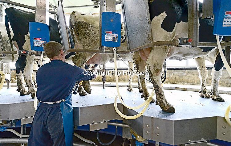 Nederland, The Netherlands, Mook, 24-2-2017Bij een melkveebedrijf worden de koeien op een moderne manier gemolken. Zij stappen in de carrousel die onderdeel is van de stal, en laten zich in een paar minuten melken. De melkbekers laten automatisch los van de uier als deze leeg is. Deze koeien kunnen ook naar buiten in de wei. Door het loslaten van het europese melkquotum verhogen veel boeren hun melkproductie. Hierdoor is er een overschot ontstaan en moeten  veel melkveehouders ermee stoppen. Hiertoe is een uitkoopregeling, subsidie, beschikbaar gesteld door de regering.FOTO: FLIP FRANSSEN