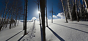 Backcountry skier Judd MacRae ascends through a grove of aspen and into the sun in Uncompahgre National Forest, Colorado.