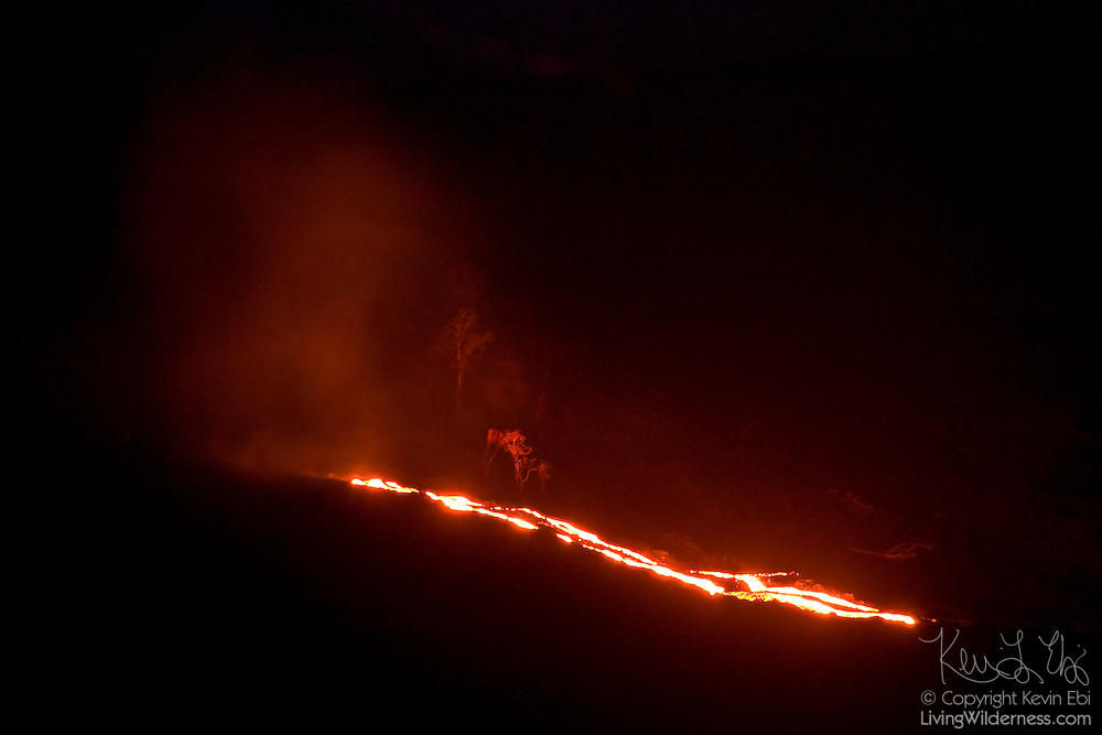 A bright lava flow illuminates full-size trees as it flows past them at night at Volcanoes National Park, Hawaii. The hot lava flows from the Pu'u O'o vent, which has erupted continuously since 1983.