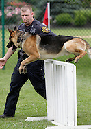 Middletown, New York - A police officer watches his police dog Kilo jump over a barrier during a demonstration at the festival following the 15th annual Ruthie Dino Marshall 5K Run and Fun Walk hosted by the Middletown YMCA on Sunday, June 5, 2011.