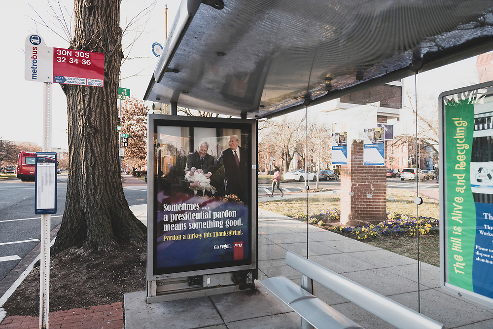 Washington DC, USA - January 21, 2021: A PETA (People for the Ethical Treatment of Animals) advertisement at a bus stop on Pennsylvania Ave SE encourages people to go vegan and pardon a turkey this Thanksgiving.