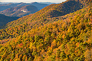 Autumn foliage at sunrise in Blue Ridge National Park from Pounding Mill Overlook outside Asheville, North Carolina.