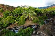 Kalalau Valley Stream, Napali Coast, Kauai, Hawaii