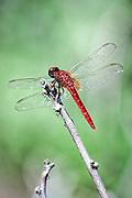 A dragonfly sits on a lone twig.