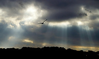 A lone seagull takes to the air as rays of sunlight break through the clouds at Paine's Creek Beach and Landing in Brewster Friday afternoon. <br /> <br /> Photographed with a Canon D60 and 70-200mm f2.8 lens<br /> <br /> 01/10/03 Matt Suess © www.mattsuess.com