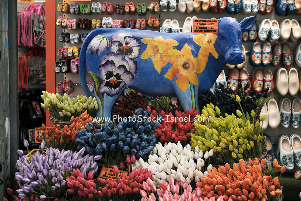 Souvenir store in Amsterdam with traditional symbols of Holland. A cow, Tulips and clogs
