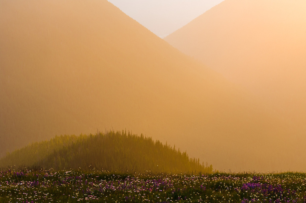 Alpine wildflower meadow, Lillian River Valley, evening light, July, Obstruction Point road corridor, Elwha River watershed, Olympic National Park, Washington, USA