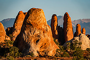 Sunset shines on red sandstone rock formations at Devils Garden Campground, Arches National Park, Moab, Utah, USA. A thick underground salt bed underlies the creation of the park's many arches, spires, balanced rocks, sandstone fins, and eroded monoliths. Some 300 million years ago, a sea flowed into the area and eventually evaporated to create the salt bed up to thousands of feet thick. Over millions of years, the salt bed was covered with debris eroded from the Uncompahgre Uplift to the northeast. During the Early Jurassic (about 210 million years ago) desert conditions deposited the vast Navajo Sandstone. On top of that, about 140 million years ago, the Entrada Sandstone was deposited from stream and windblown sediments. Later, over 5000 feet (1500 m) of younger sediments were deposited and then mostly worn away, leaving the park's arches eroded mostly within the Entrada formation.