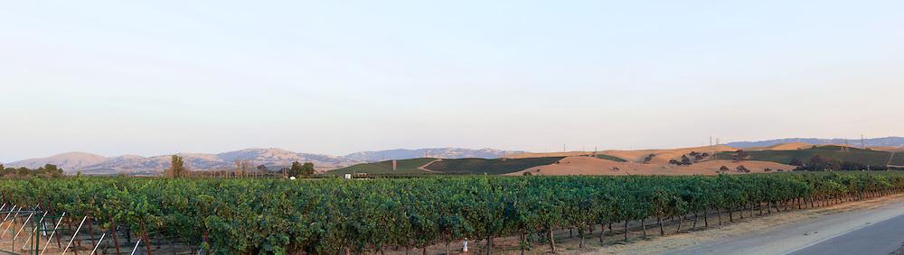 Vineyard. (46156 x 13054 pixels)