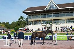 Ricky Balshaw, (GBR), LJT Enggaards Solitaire - Horse Inspection Para Dressage - Alltech FEI World Equestrian Games™ 2014 - Normandy, France.<br /> © Hippo Foto Team - Jon Stroud<br /> 25/06/14