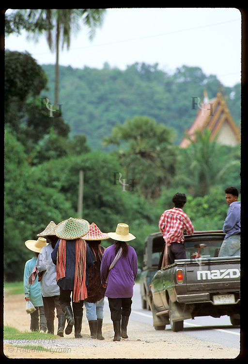 Pickup truck passes group of women in straw hats walking home from work for lunch; Phuket Is. Thailand