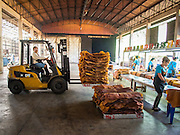 """16 DECEMBER 2014 - CHUM SAENG, RAYONG, THAILAND: A forklift is used to move sorted and inspected smoked rubber sheets into a warehouse on a large rubber plantation near Chum Saeng, Thailand. Thailand is the second leading rubber exporter in the world. In the last two years, the price paid to rubber farmers has plunged from approximately 190 Baht per kilo (about $6.10 US) to 45 Baht per kilo (about $1.20 US). It costs about 65 Baht per kilo to produce rubber ($2.05 US). Prices have plunged 5 percent since September, when rubber was about 52Baht per kilo. Some rubber farmers have taken jobs in the construction trade or in Bangkok to provide for their families during the slump. The Thai government recently announced a """"Rubber Fund"""" to assist small farm owners but said prices won't rebound until production is cut and world demand for rubber picks up.    PHOTO BY JACK KURTZ"""